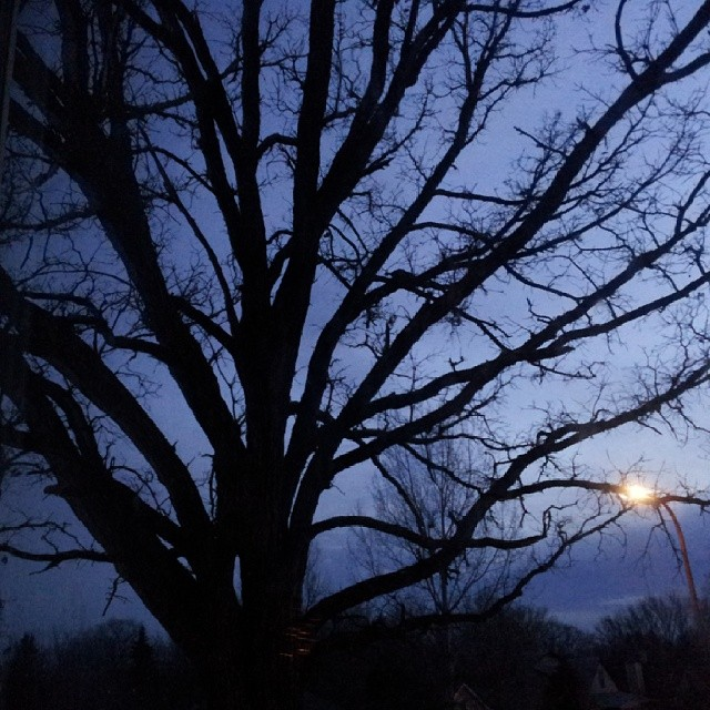 Scenic night view of oak tree against night sky in Detroit Lakes Minnesota