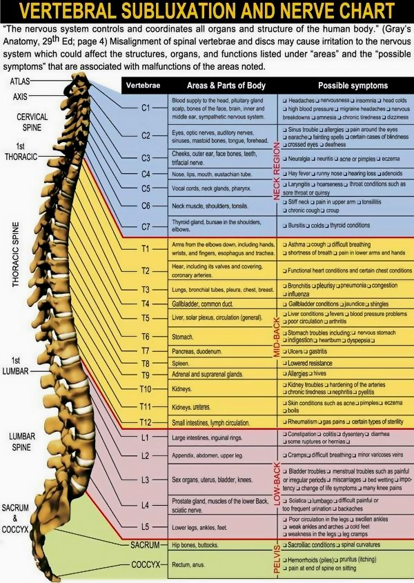 Infographic Vertebral Subluxation and Nerve Chart
